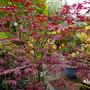 P1110845 AA kitchen garden