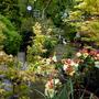 P1110846 AA kitchen garden