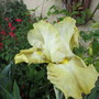 Again & Again (Iris)