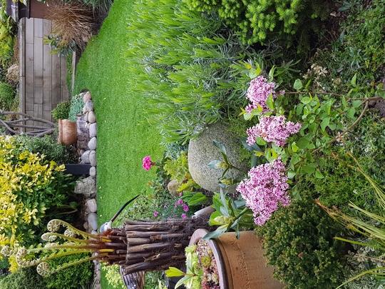Lilac (Syringa josee)