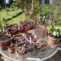 hardening plants off 1