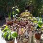 hardening plants off 2
