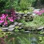 My Watergarden