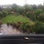 My garden through my kitchen window