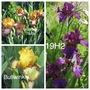 Clumping up Iris (Iris)