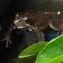 My water feature frog