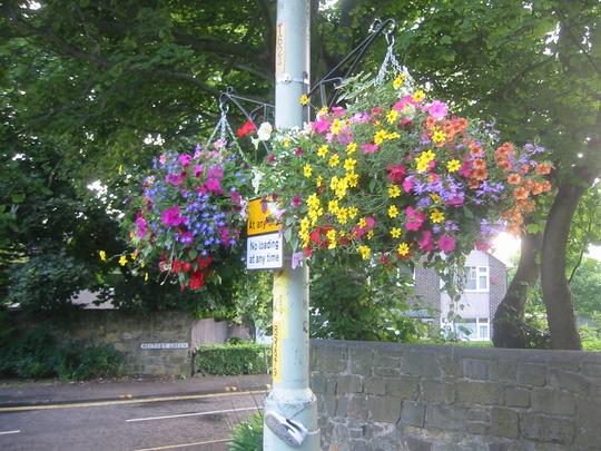 Hanging Baskets in West Boldon, South Tyneside. U.K.
