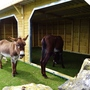 Donkey sanctuary at Flagg we visited yesterday.