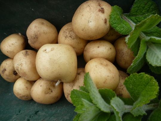 New potatoes Rocket  ..