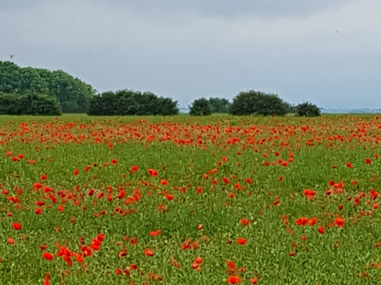 Lincolnshire countryside.