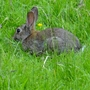 Rabbit seen as we walked along the canal path.
