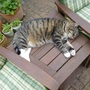 Cat napping!