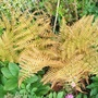 Fern, name not known ...