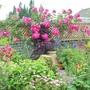 Garden view with Rosa American Pillar growing along the trellises.