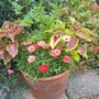 Container planting.....