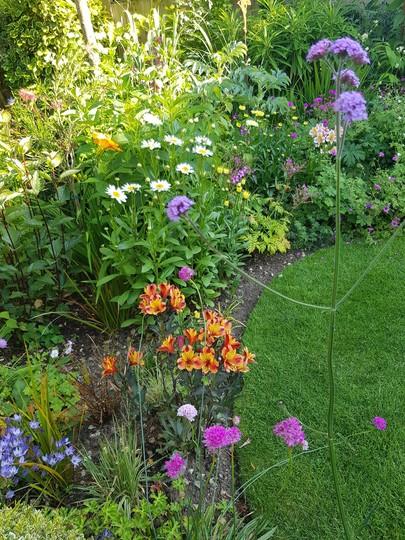 It's daisy time......Leucanthemum. (Leucanthemum vulgare)