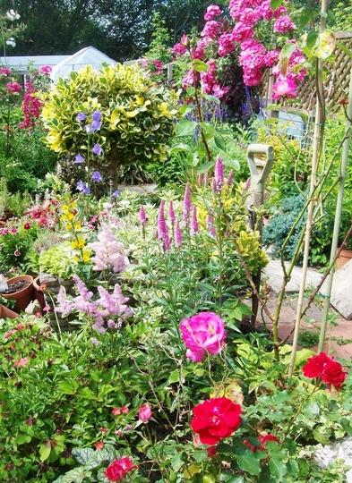 Herbaceous perennials and shrubs.