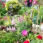 Herbaceous perennials and shrubs.