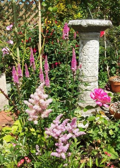 Pink July flowers in my garden.