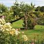 Rosa 'Scented Garden' and a very 'scented' garden :) (Rosa 'Scented Garden')