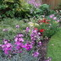 Some of the back garden flowerbed.
