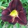 Dark purple 9/7/19