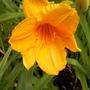 Peach/orange 9/7/19  1st