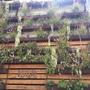 Succulent Wall  (Succulent Wall)