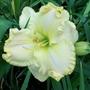 Yellow ruffled 12/7/19