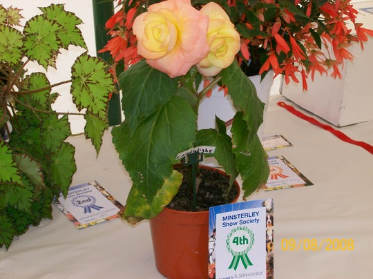 Minsterley Show 2008