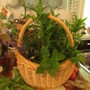 8687 basket of bounty... some herbs