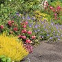 Yellow Heather and Friends
