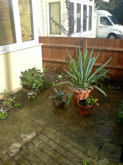 corner - front garden revamped