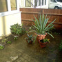 corner - front garden revamped