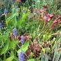 The Top Pond (Sarracenia)