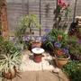 My tiny, sunny garden.