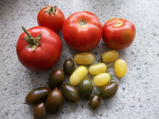 Tomatoes mix