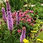 Liatris,Monarda and Achillea.