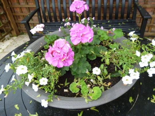 Dish newly planted . . .