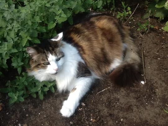 Jessie & Catmint