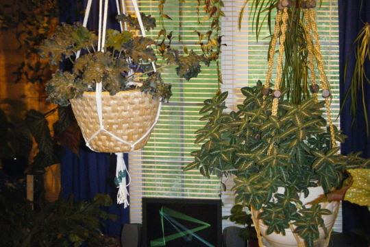 Indoor Heuchera and Monkey plant