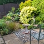 Altered poolside planting.