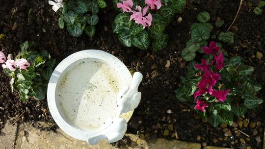 Planted a few Cyclamen around the small bird bath.