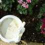 Planted a few Cyclamen around the small bird bath.