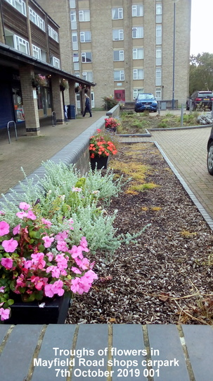 Troughs of flowers in Mayfield Road shops carpark 7th October 2019 001