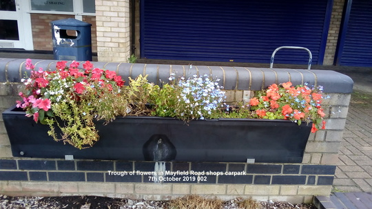 Trough of flowers in Mayfield Road shops carpark 7th October 2019 002