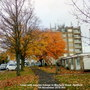 Trees with autumn foliage in Mayfield Road Hartford 7th November 2018 001 001