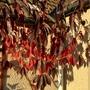 Prunus foliage falling now
