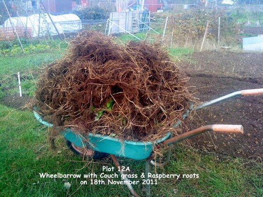 Plot 12A Wheelbarrow with Couch grass & Raspberry roots 18-11-2011