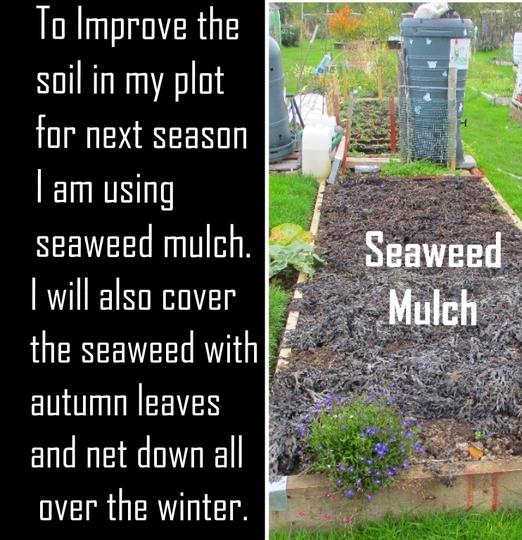 ..Seaweed